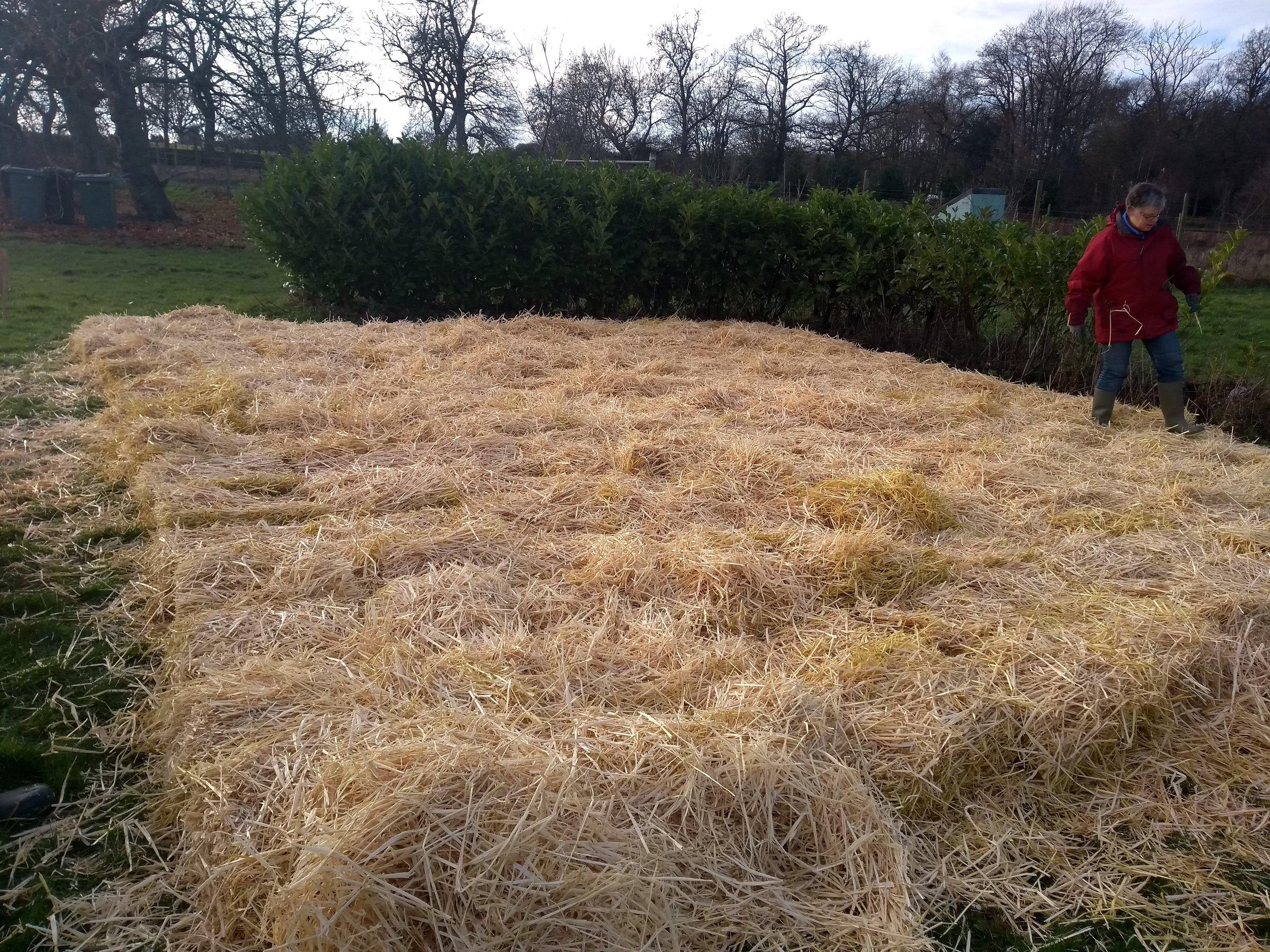 potato straw bed .jpg
