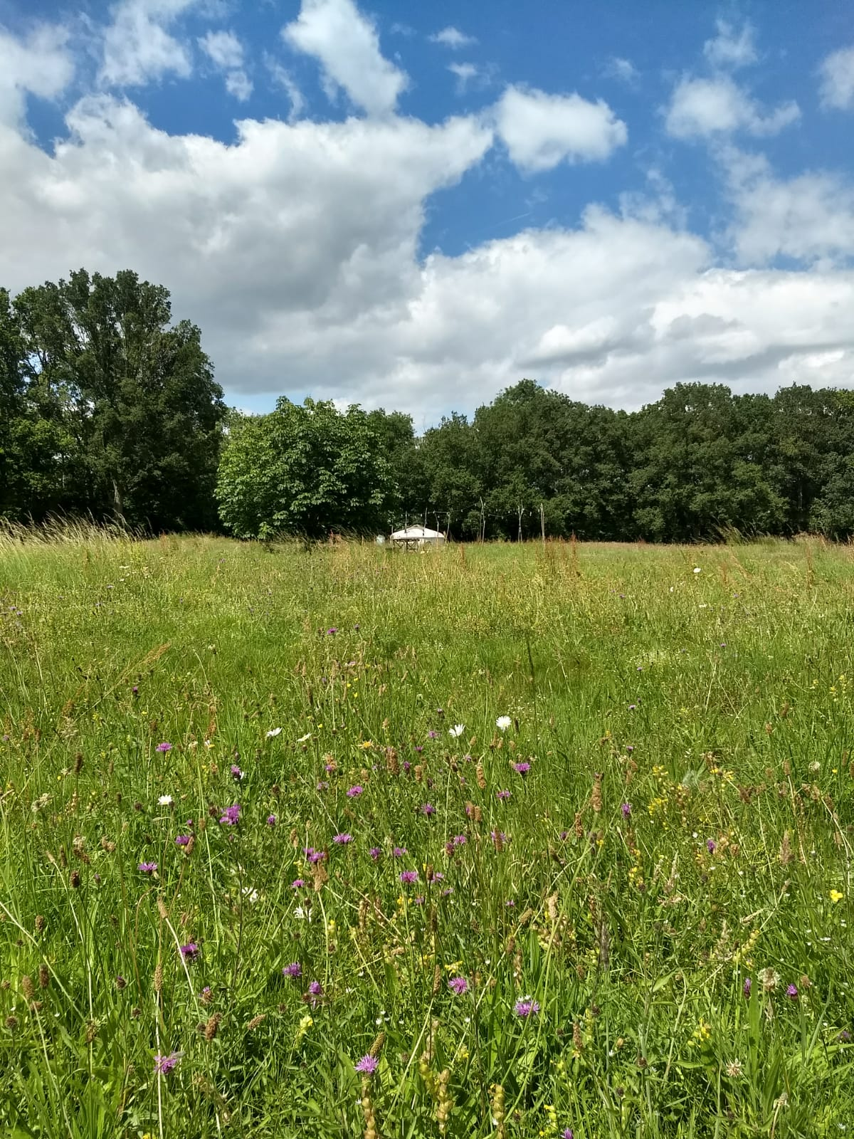 Wildflower glamping meadow