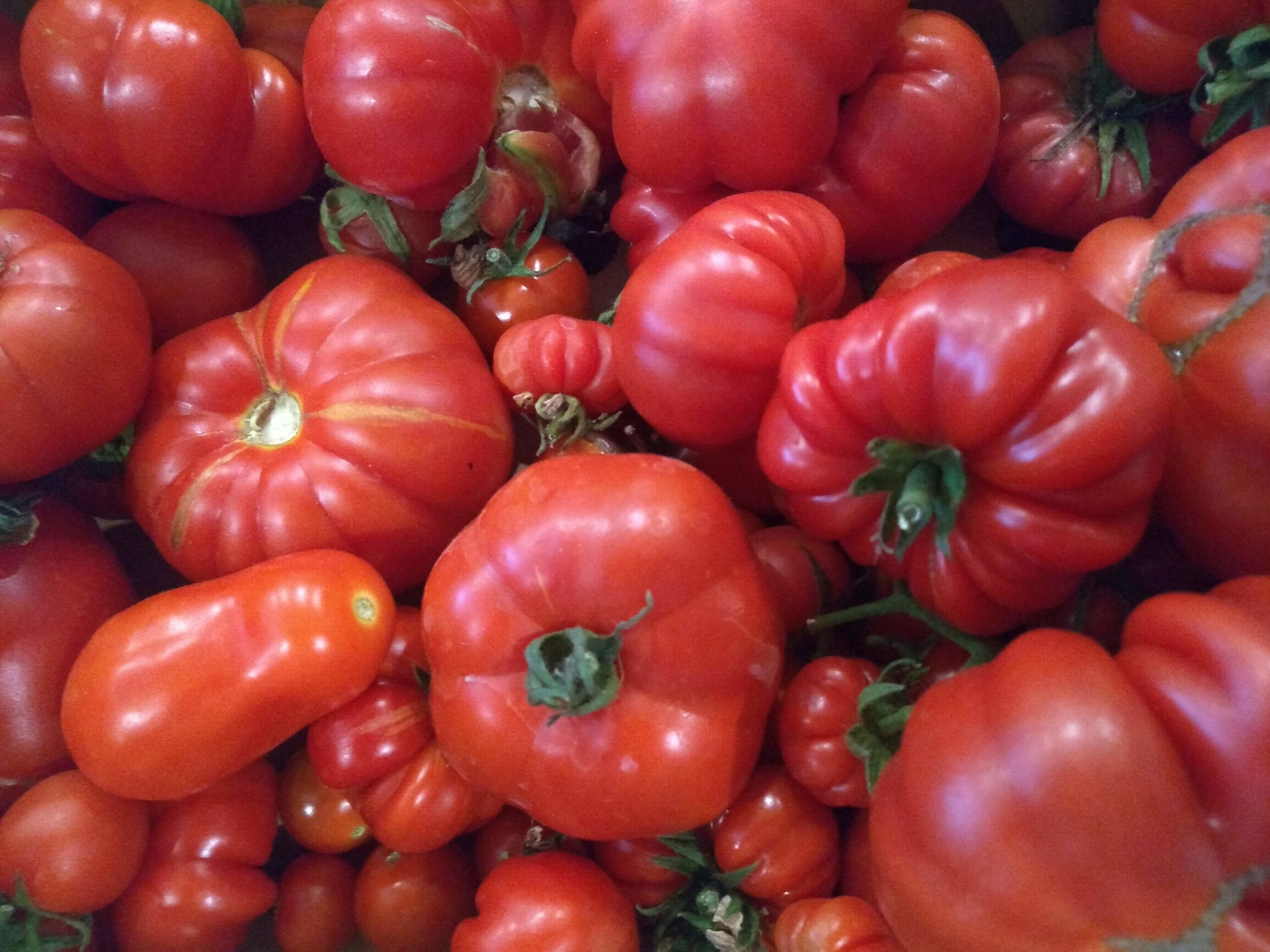 Delicious fresh homegrown tomatoes - smallholding produce