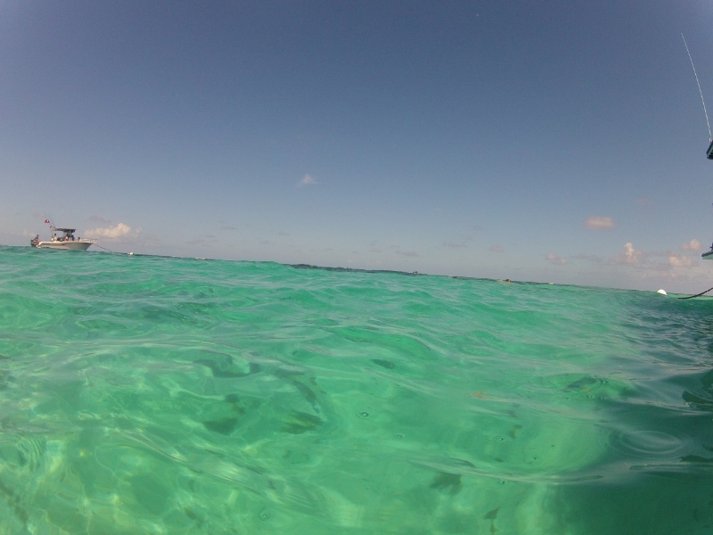 This is a real picture that I took one day snorkeling…are you kidding me? So ridiculous. My happy place.