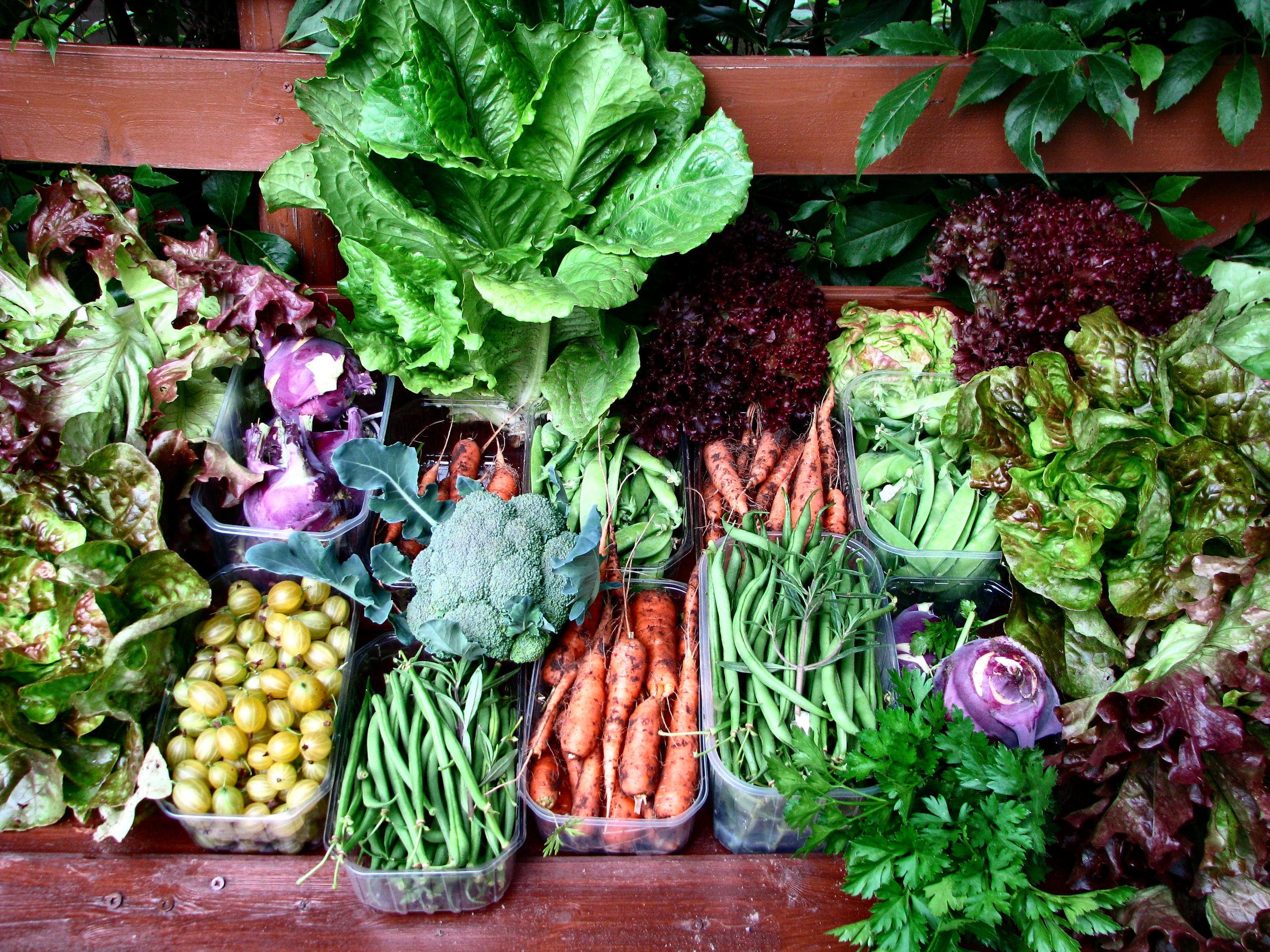 Fresh Herbs.jpg