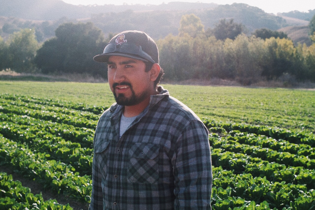 Chuy started his own farm about 5 years ago and was quick to grow super quick. He grew off his five acre farm and is farming over 50 acres in Buellton. Chuy's father is the foreman to John Givens and he's been taught only by the best. Chuy sells his produce to big distributors and he's in LA farmers markets.