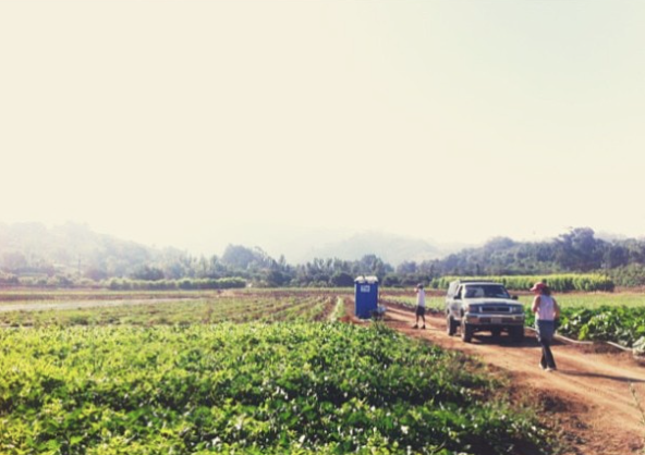 My dads old farm in Carpinteria. Currently being farmed now by Alex Frecker. A typical morning of Jason and I harvesting.