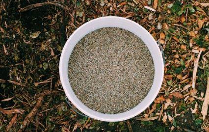 Seeding the Hillside -