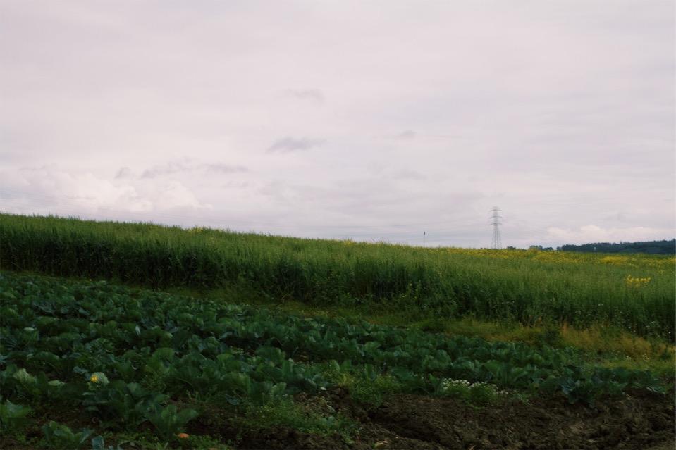 A good healthy cover crop on the field next door.