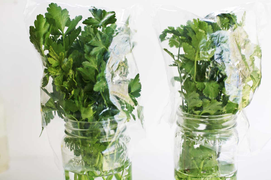 This is the best way to store cilantro. - 1. cut one inch off stems.2. place in cup of water and put a plastic bag over leaves.3. leave in fridge.