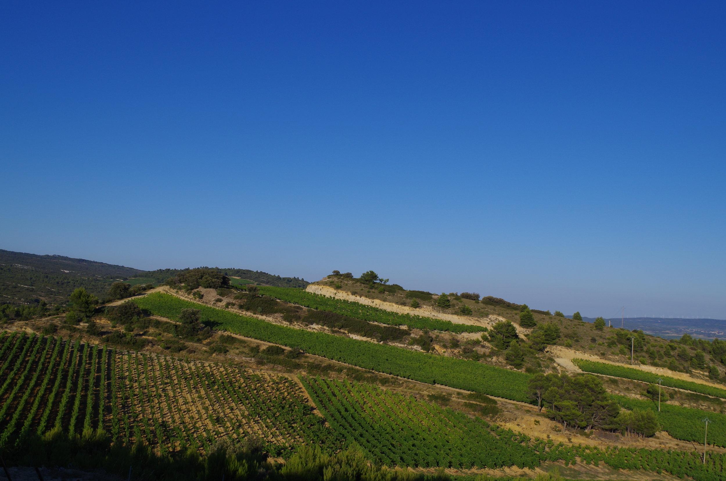 Combes Grenache vineyard - HIGH RES -  jacques herviou.JPG