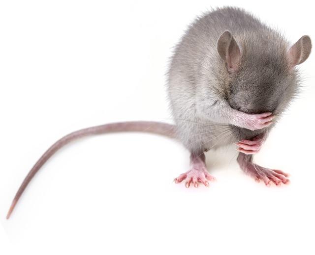 mouse-3194768_640.jpg