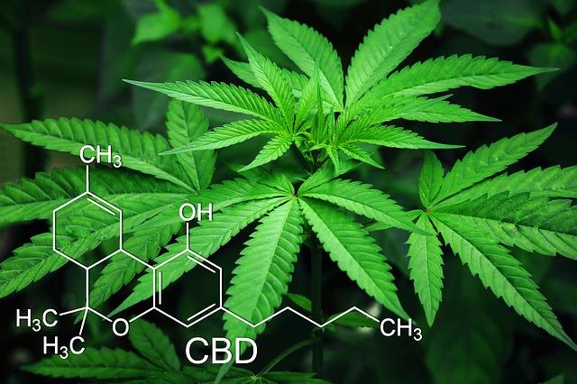 marijuana-3678222_640.jpg