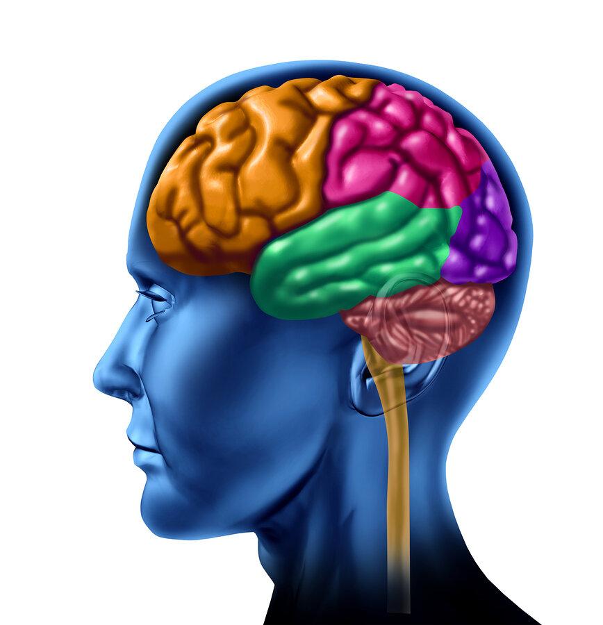 bigstock-Human-brain-chart-with-colored-11863427.jpg
