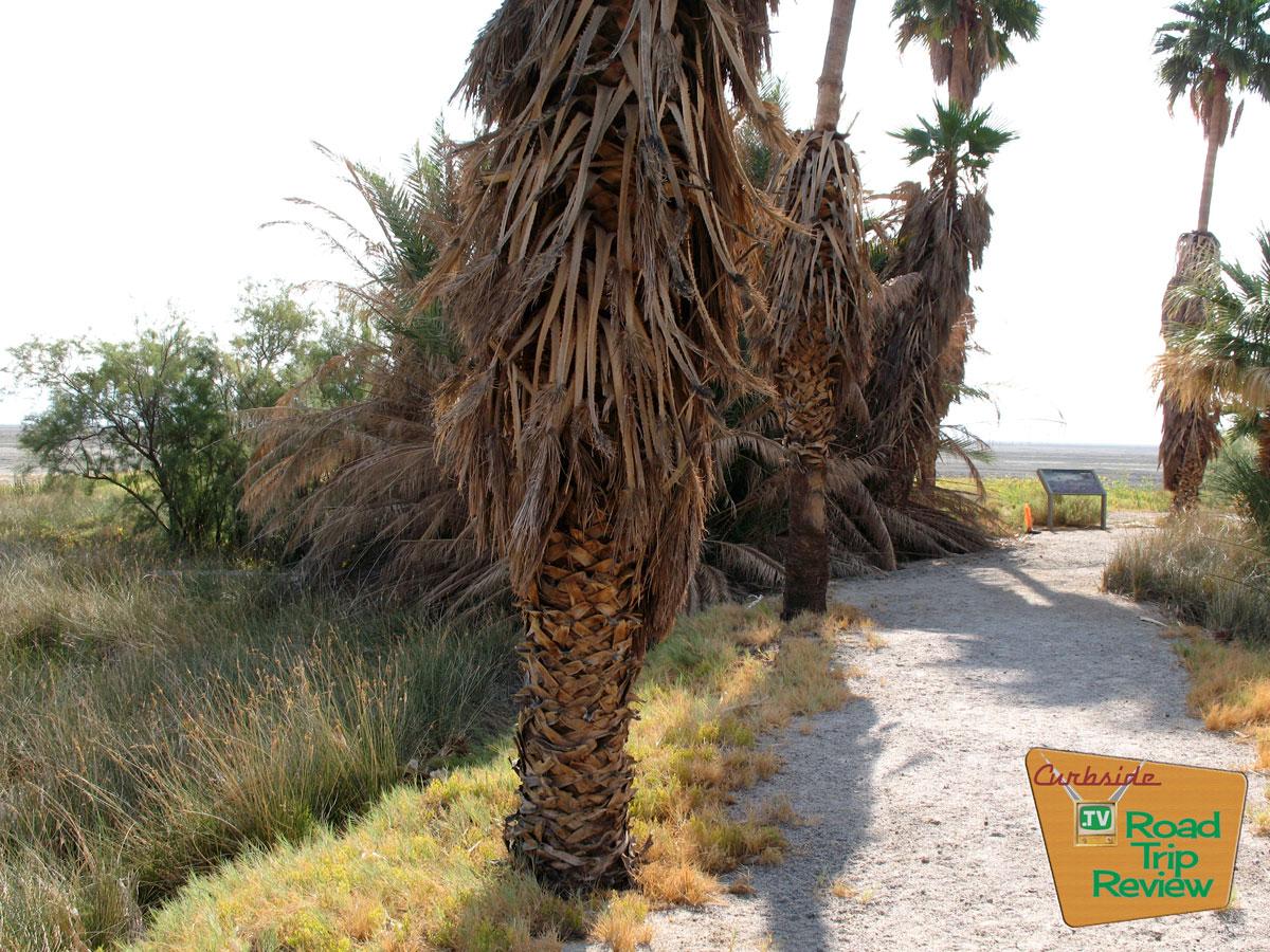 Zzyzx-palm-trees.jpg
