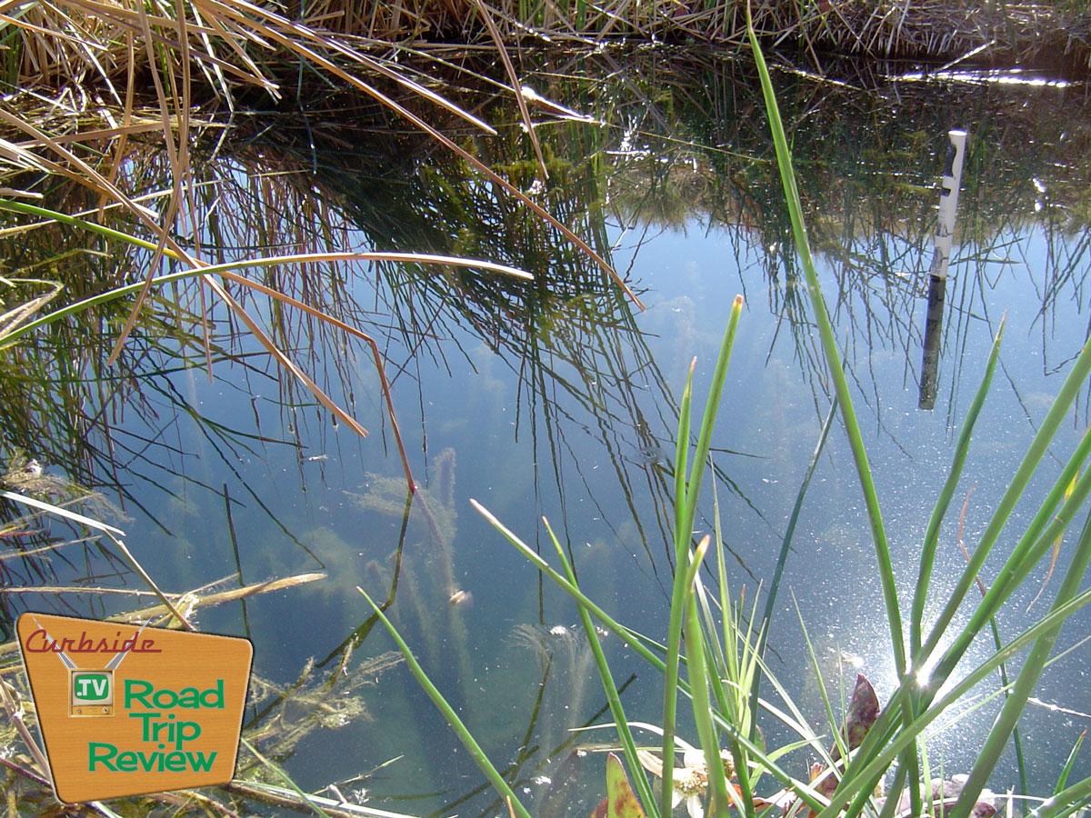 Zzyzx-Tule-Pond-close.jpg