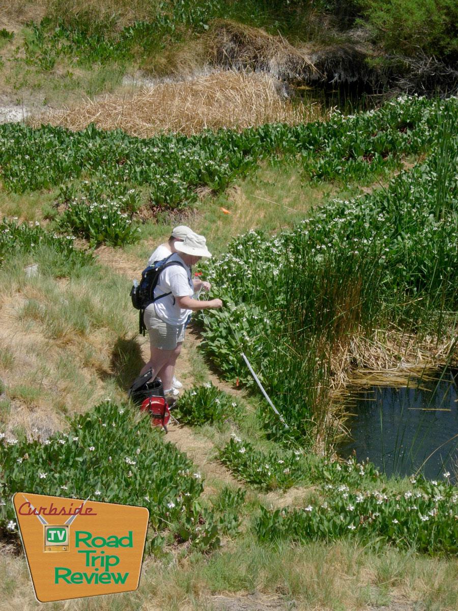 Zzyzx-Tule-Pond-measuring.jpg