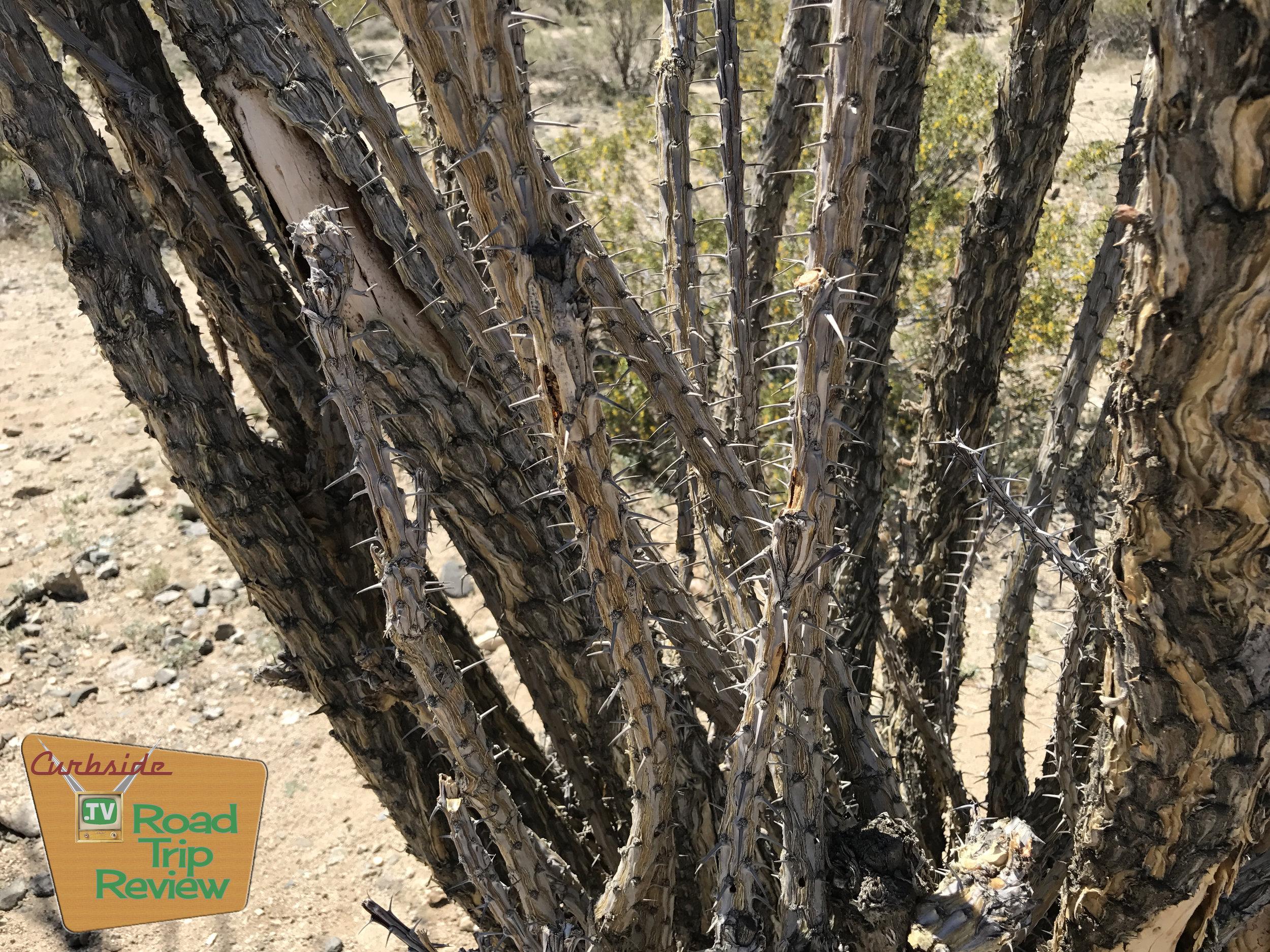 Joshua Tree National Park - 99.jpg