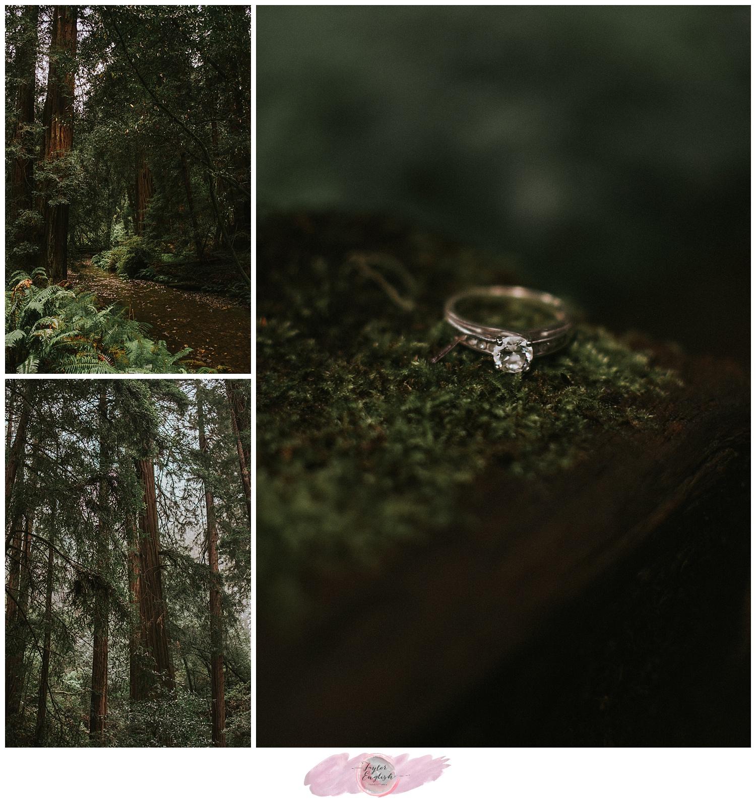 tephoto_muirwoods_engagement8