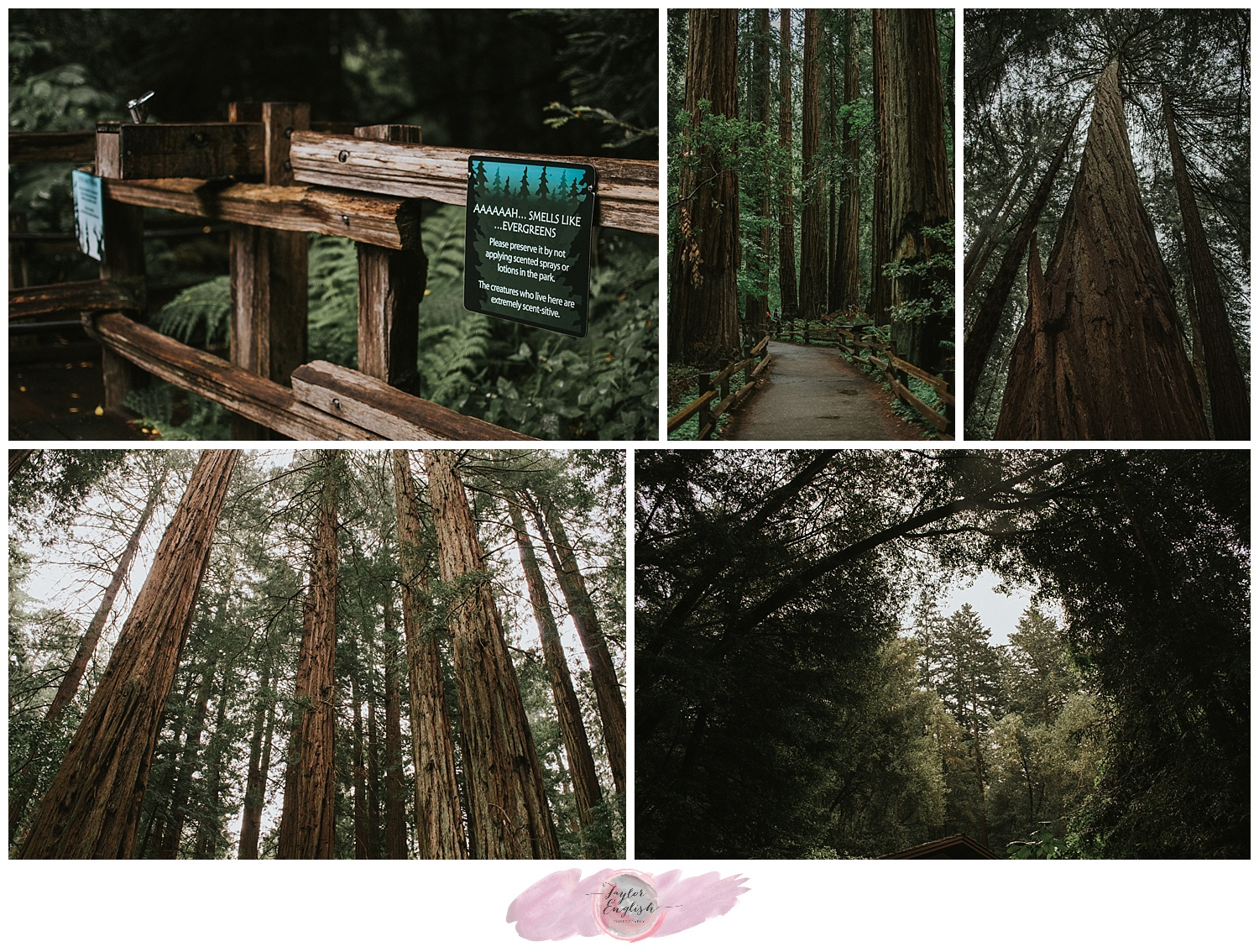 Muir Woods National Monument and the overwhelming beauty of the legendary California Redwoods.
