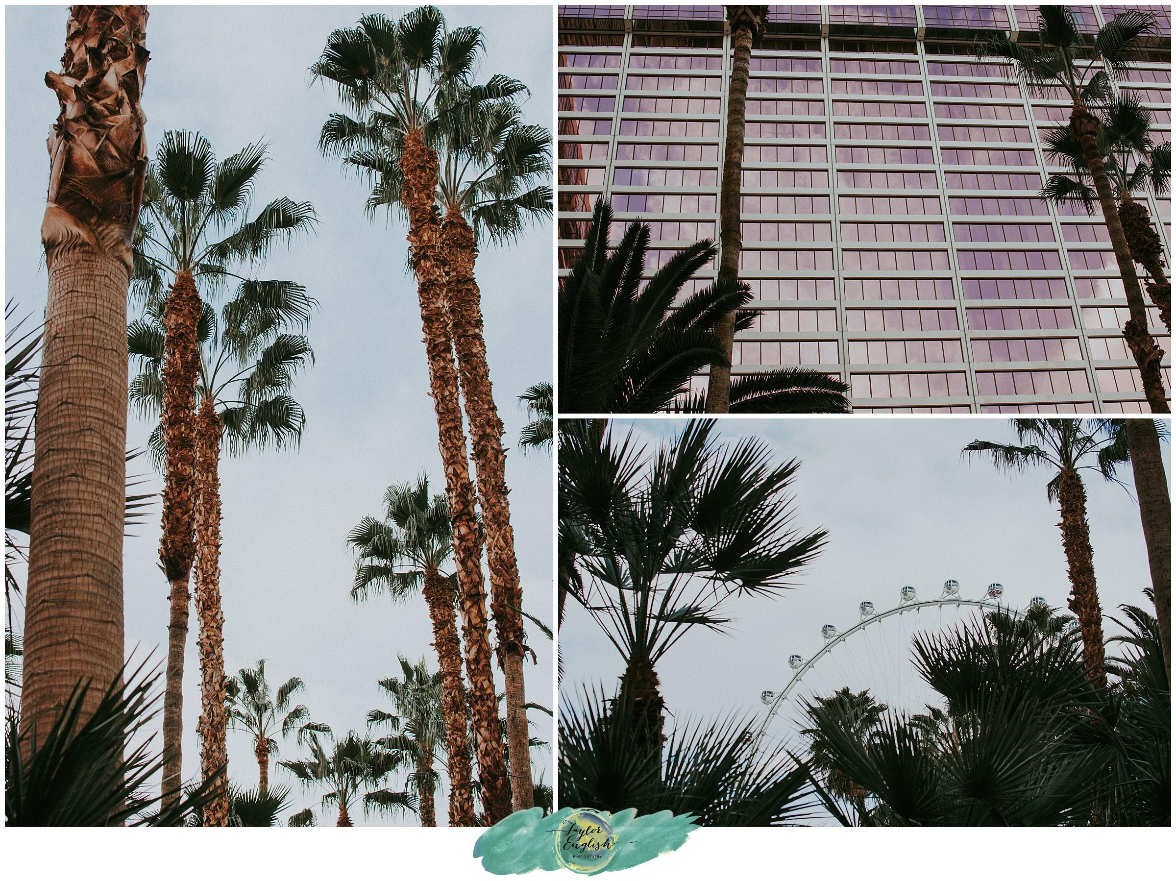 Taylor_English_Photography_Las_Vegas_Photographer7