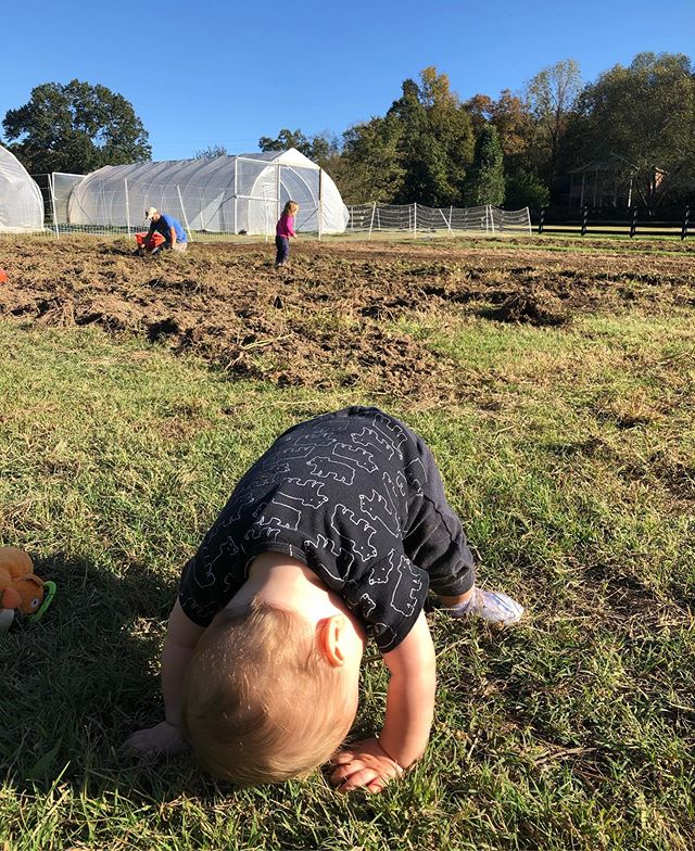If you eat a sweet potato from @westglowfarm just know they were harvested by my toddler and this yogi master #familyfarm #regenerativeagriculture #kingstonspringstn  #nashville #tennessee
