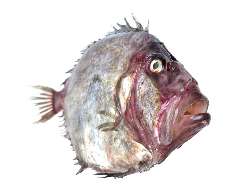 Commission: Hatton Marketing / The Fine Seafood Company