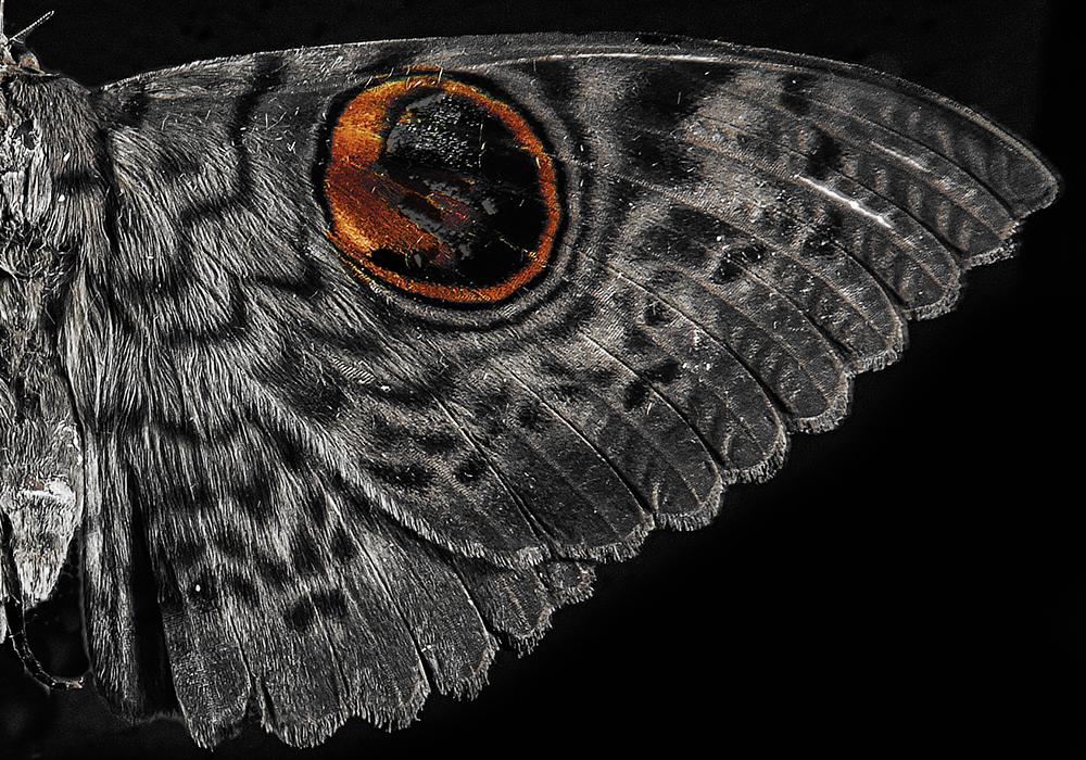 mutant moth 3.png