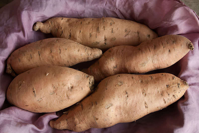 Sweet Potatoes 'Bonita' from Three Stone Farm