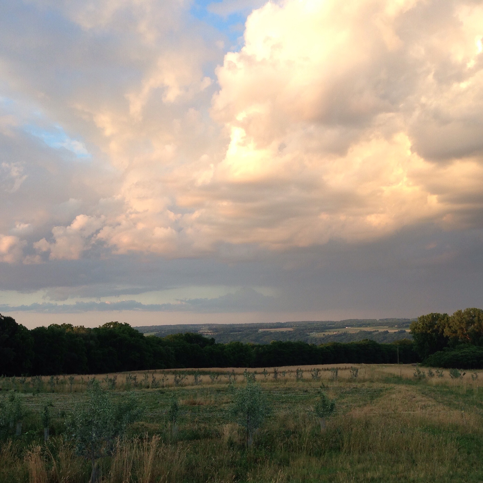 Brown grass, resilient clover and great clouds: signs of a dry year