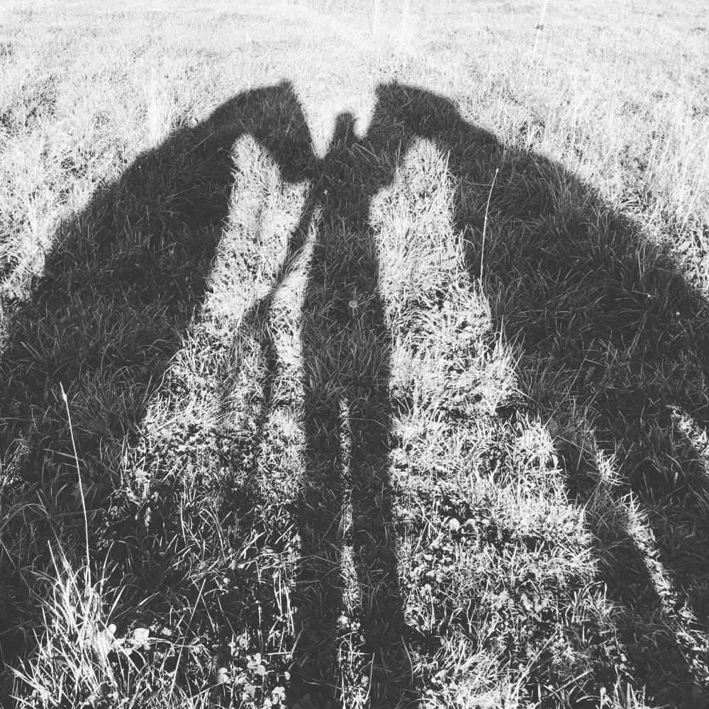 horse shadows.jpg