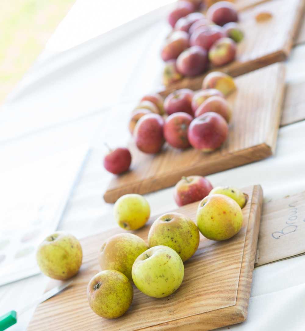 apple line up.jpg
