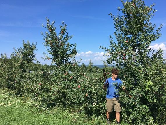 Garrett summer pruning 2018.jpg