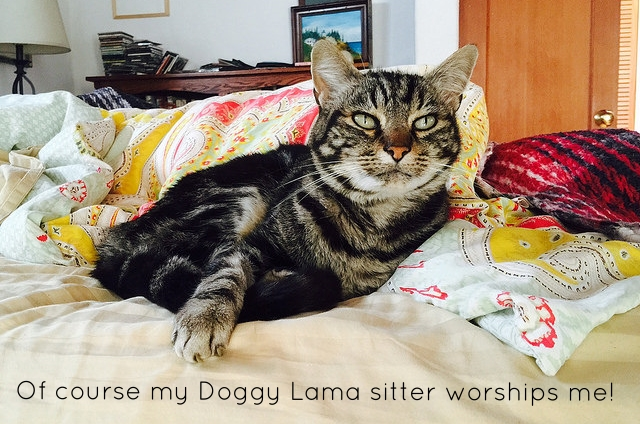 Best East Bay pet sitter, dog sitter, and cat sitter in Oakland, Berkeley, and Emeryville