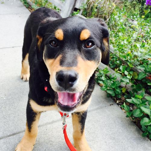 Best East Bay puppy training in Oakland, Berkeley, Emeryville