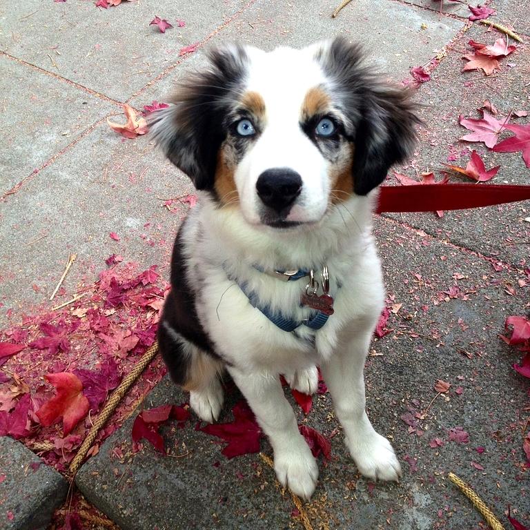 Oakland best puppy training