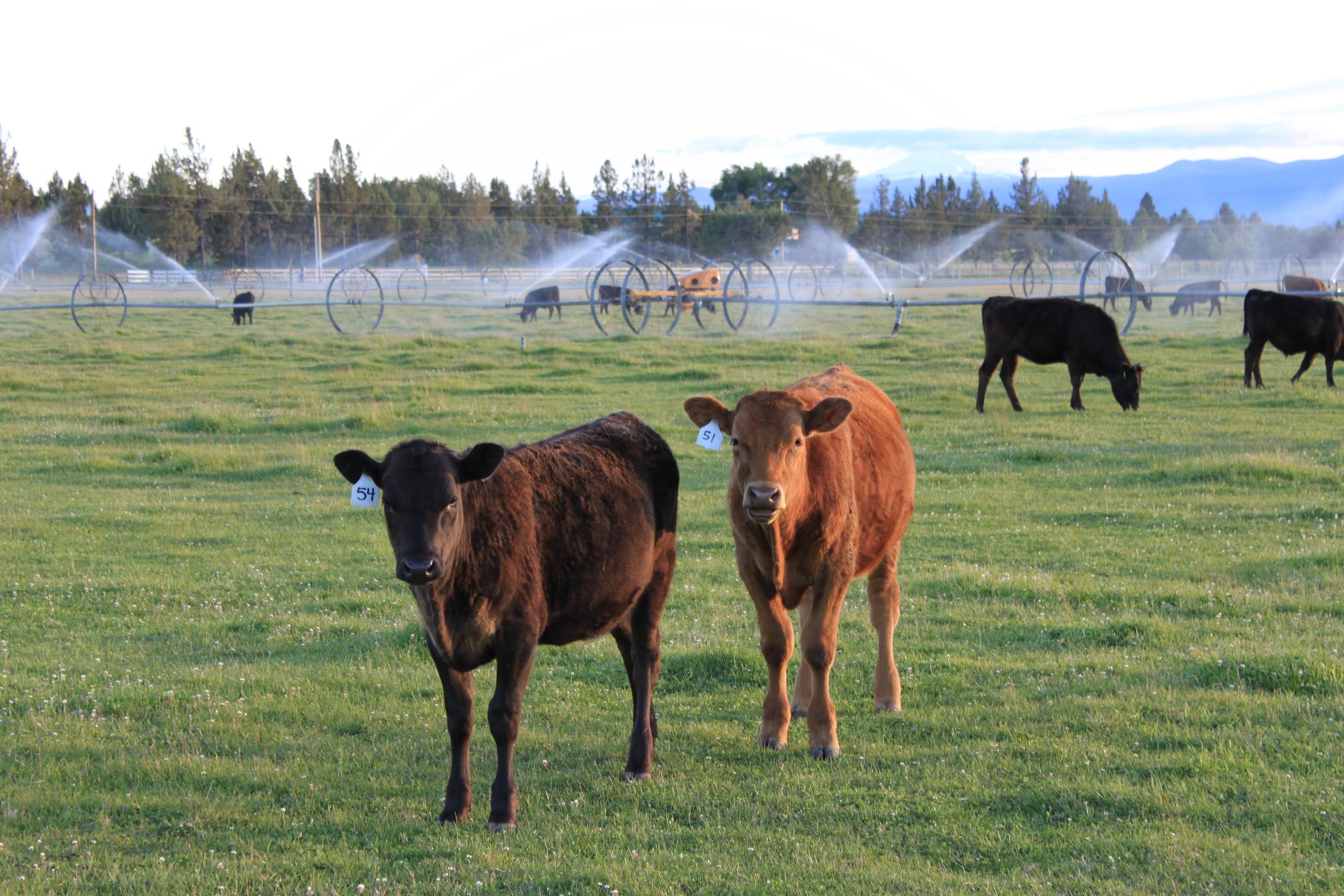 Story Farm 3.JPG