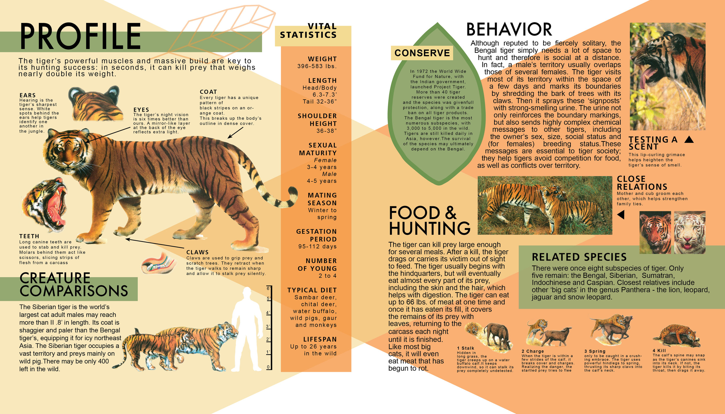 Animal Book Pages 2 and 3