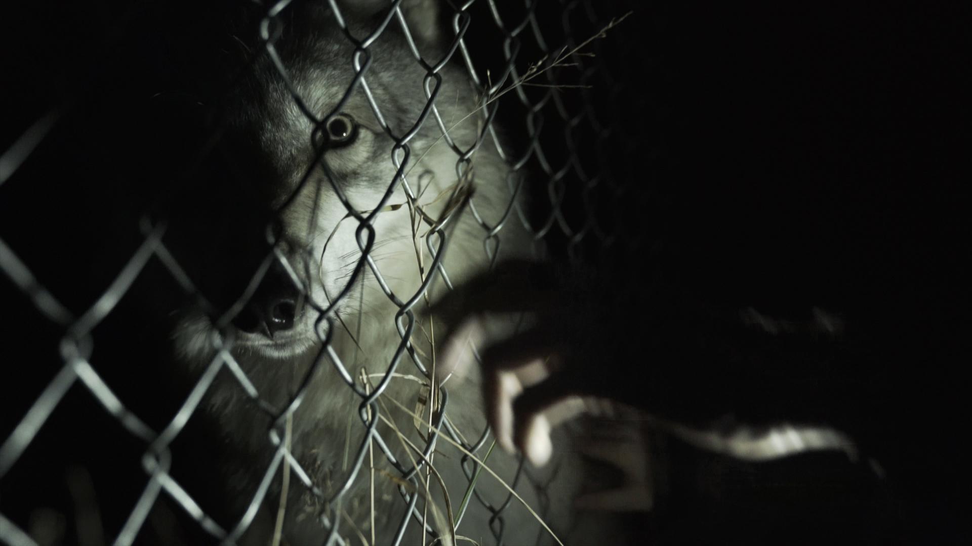 wolf-fence-eye-hand.jpg