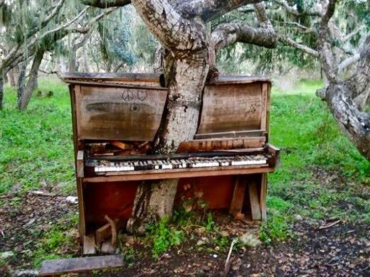 Piano tree.jpg