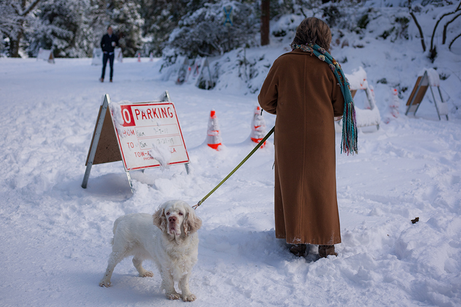 Snowmaggedon (13 of 26).jpg