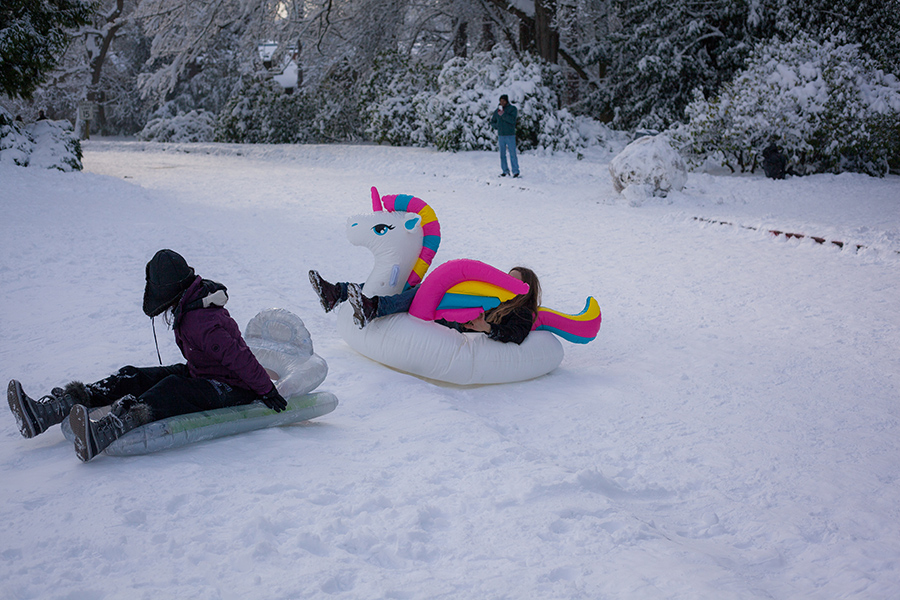 Snowmaggedon (19 of 26).jpg