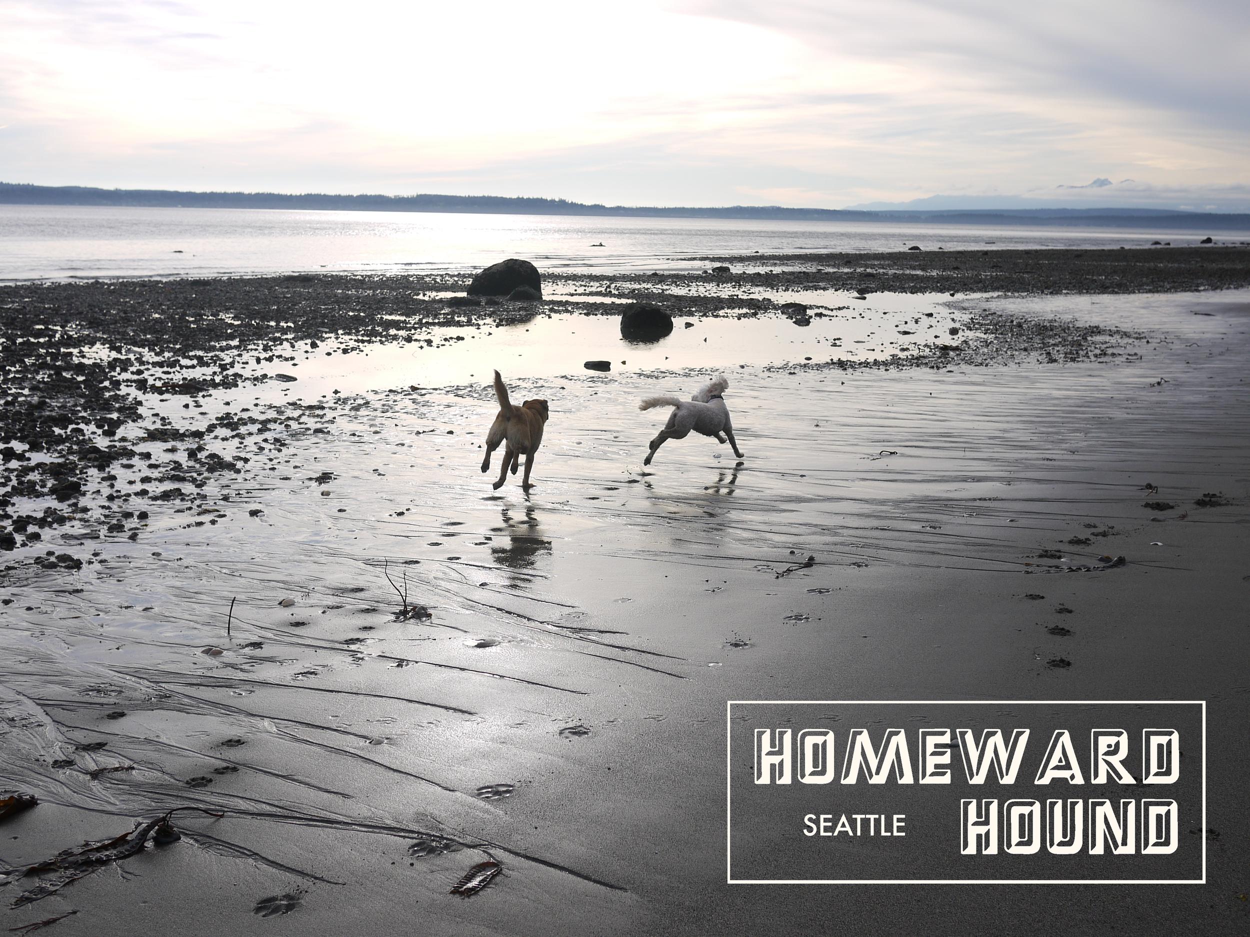Seattle Off Leash Dog Walking Homeward Hound