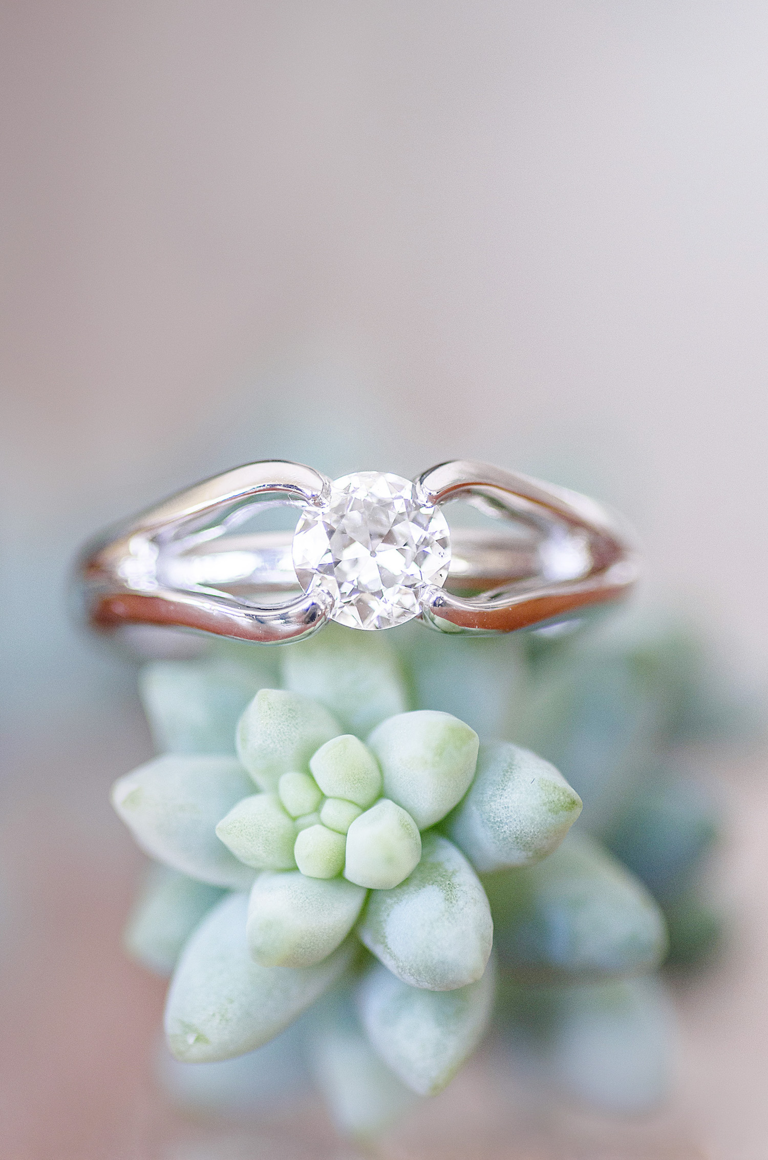 Diamond Engagement Ring with a Succulent captured by Let There Be Light Photography in Cochrane Alberta