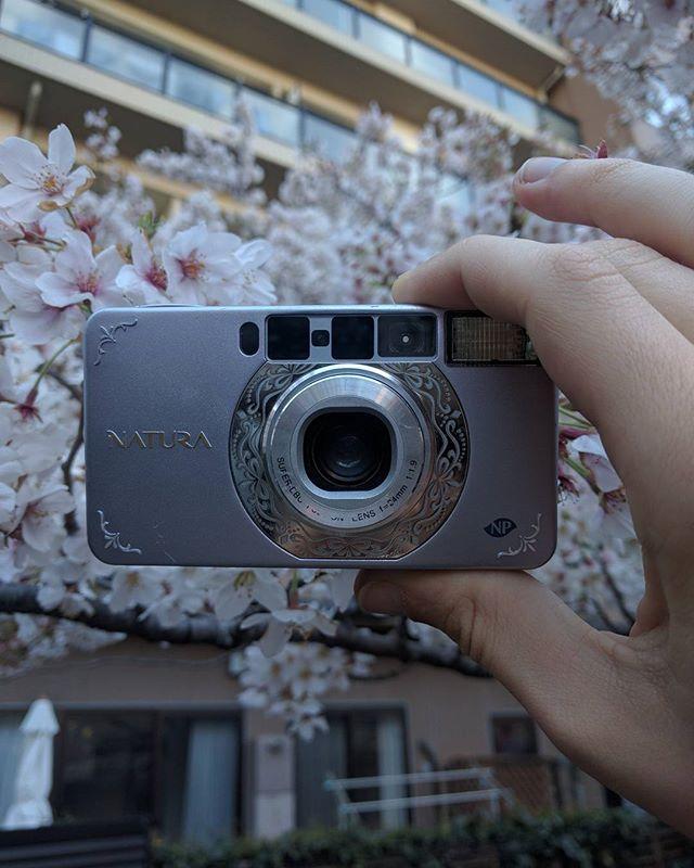 Fujifilm natura S  Beautiful compact that takes beautiful pictures . . . #shootfilmnotguns #keepfilmalive #believeinfilm #filmphotographer #filmcamera #classiccamera #oldschoolcamera #fujifilm #filmcommunity #filmcompact #pointandshoot #fujifilmnatura #natura1600 #kodak #leica #reddot #35mmcompactcamera #streetstyle #pink #sakura #japanphotography #travelphotography