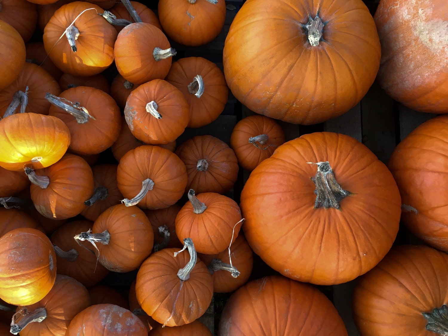 Fall vegetables and what to do with them: Delicious and easy vegan meal ideas for cooking with pumpkin, kale, collard greens, parsnips, sweet potatoes and mushrooms