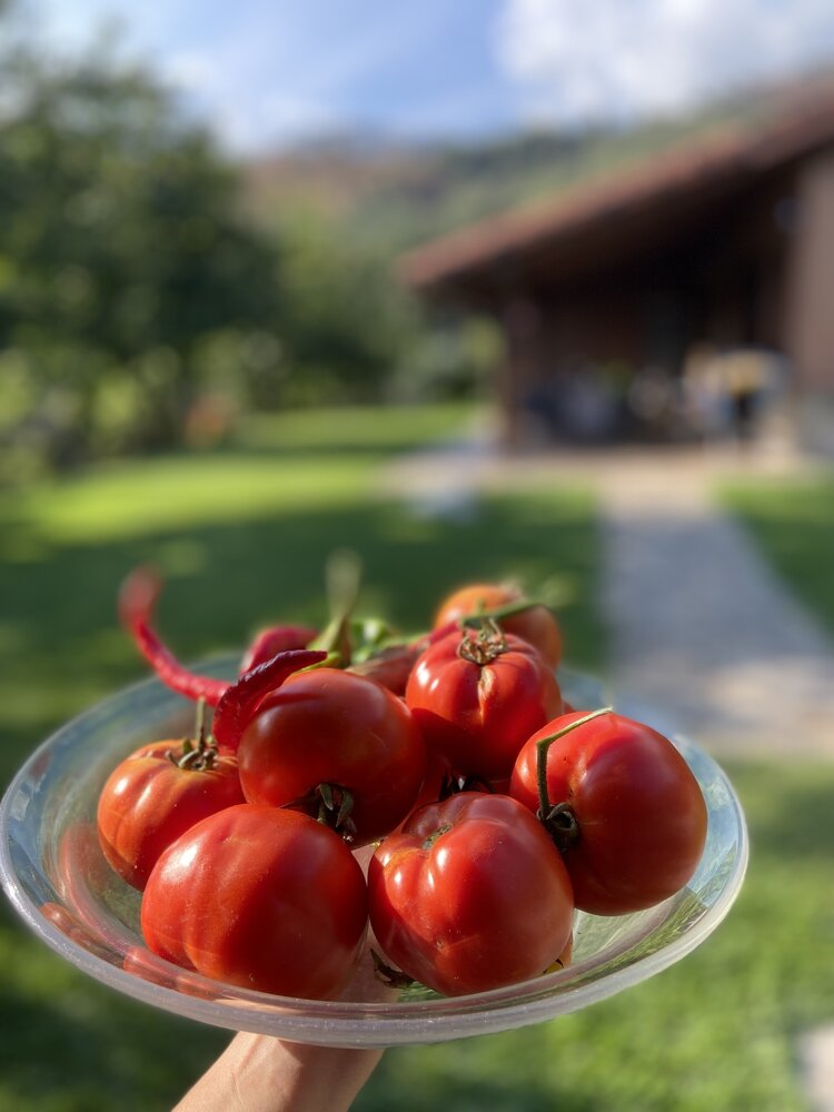 vegan_travel_brownble_connecting_with_the_land_in_rural_spain_vegan_meal_ideas_for_family_trips_with_omnivores_19.jpg