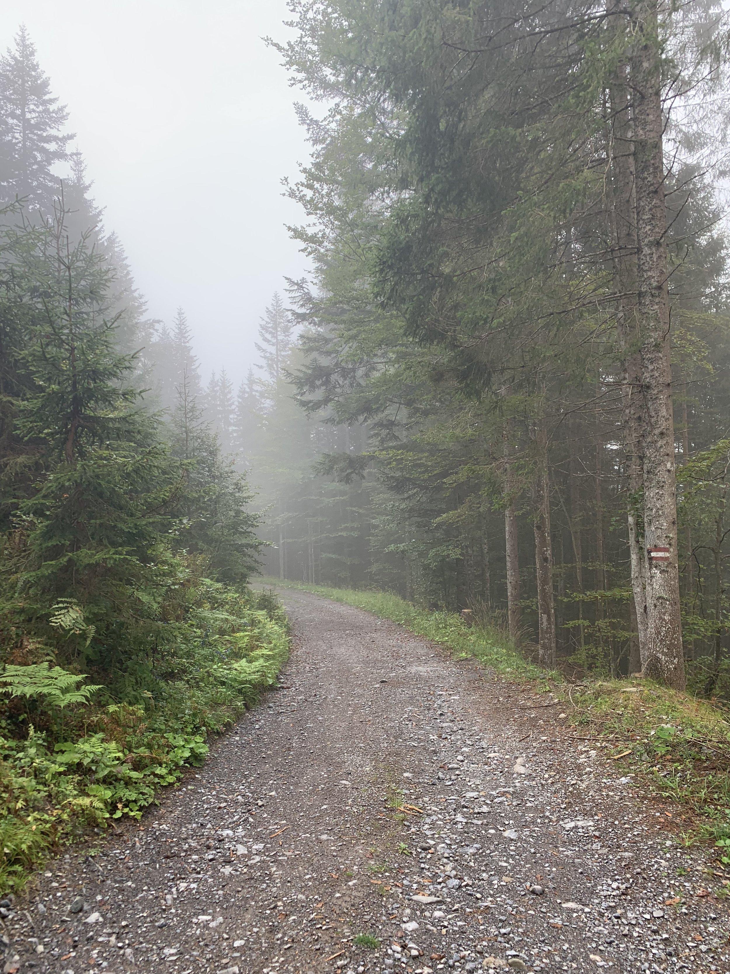 Into the fog (again)