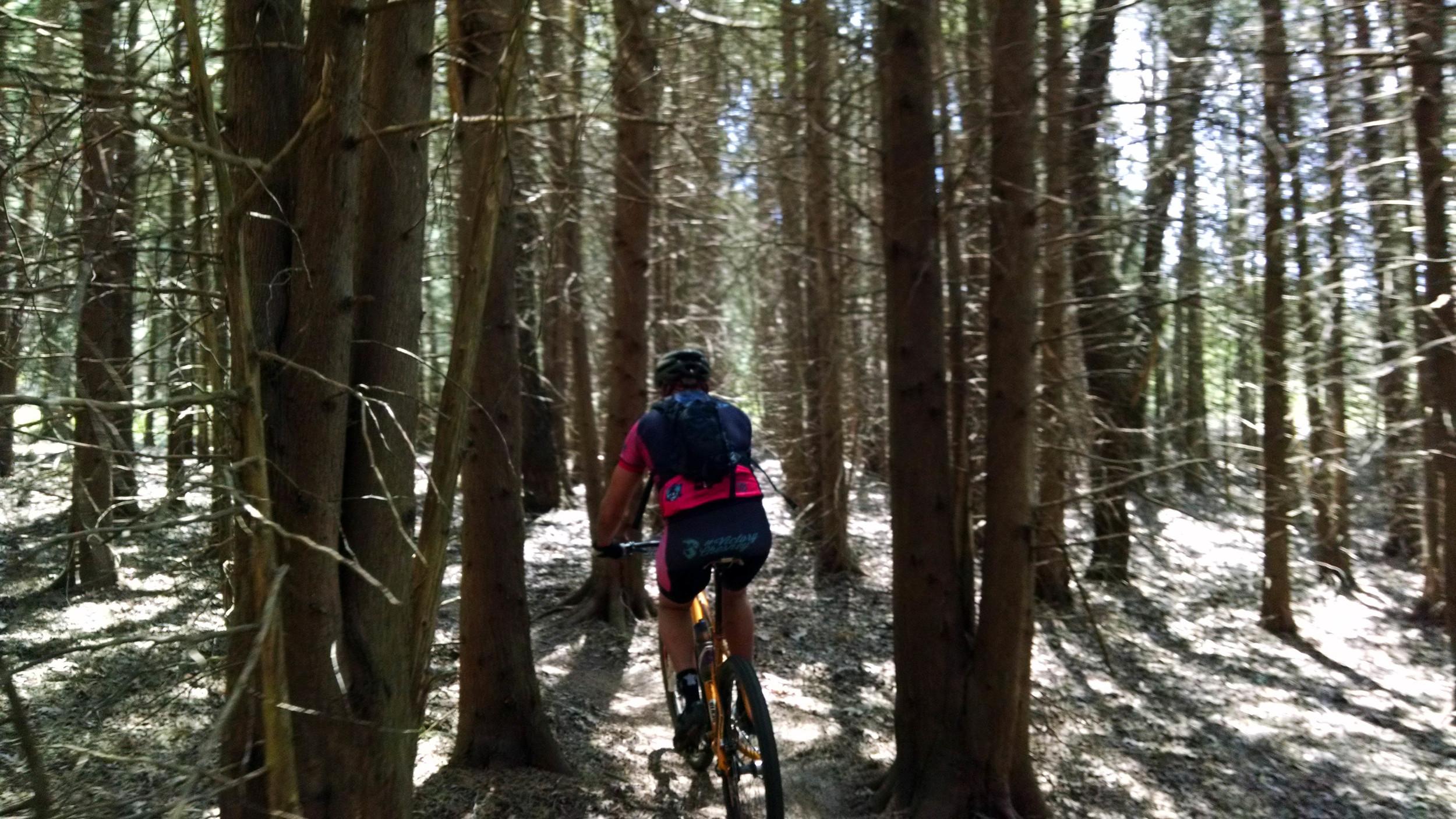 Schratz out in a pine forest.