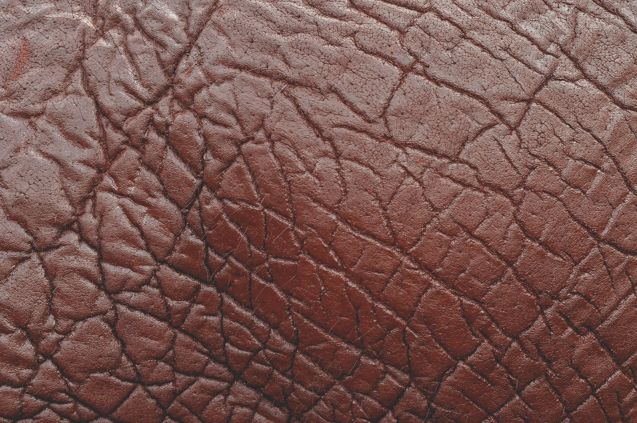 elephant skin low res.jpg