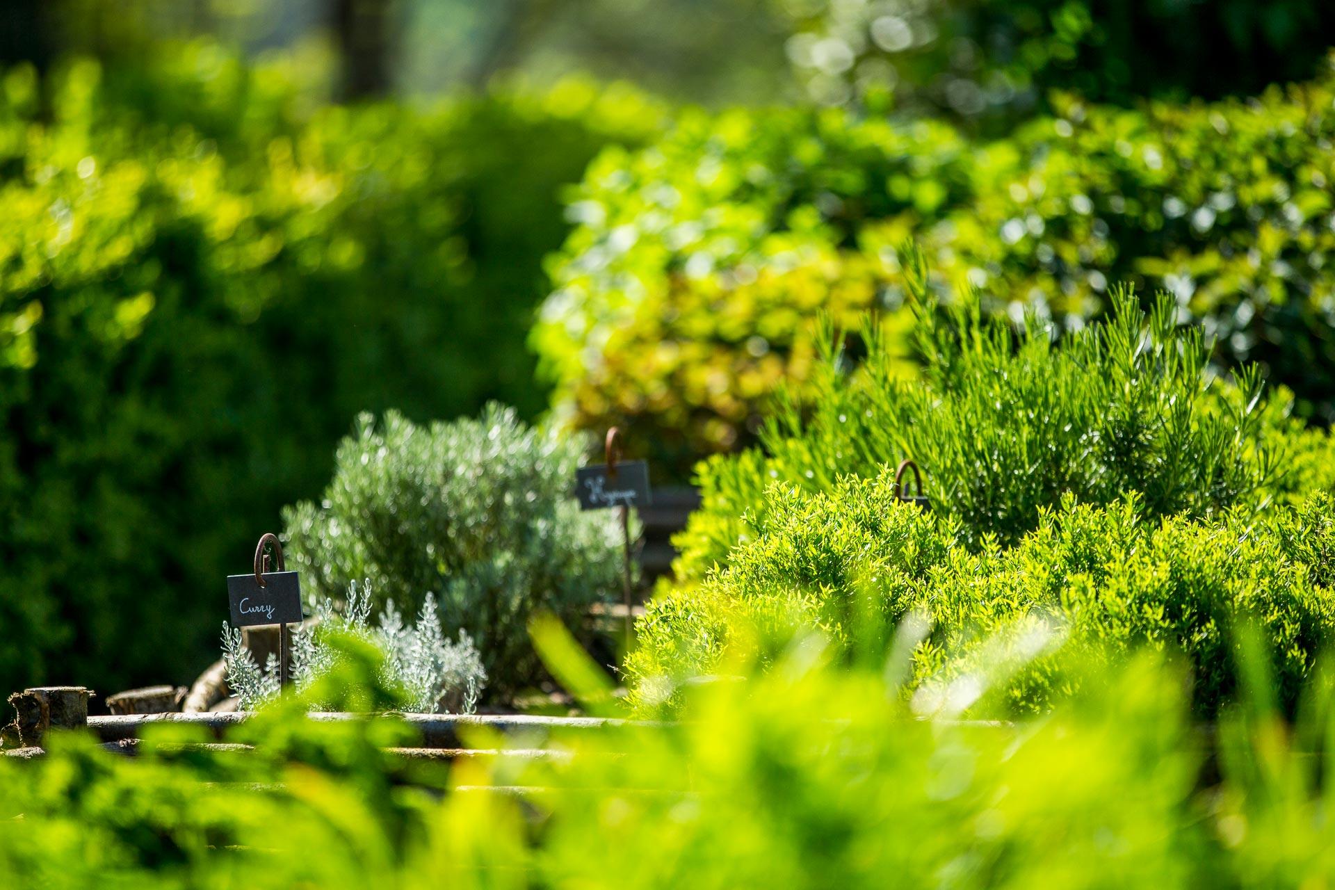 Herbes aromatiques : thym, estragon, basilic