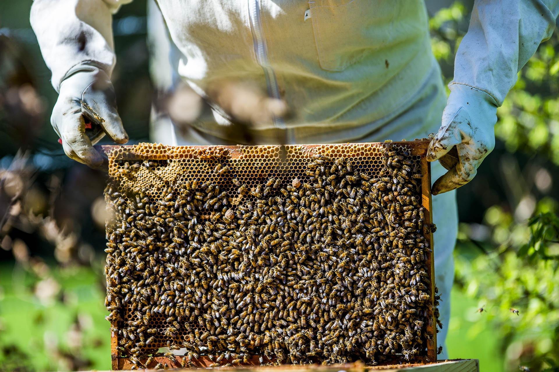 domainedablon_ruche_abeilles©stephaneleroy-11.jpg