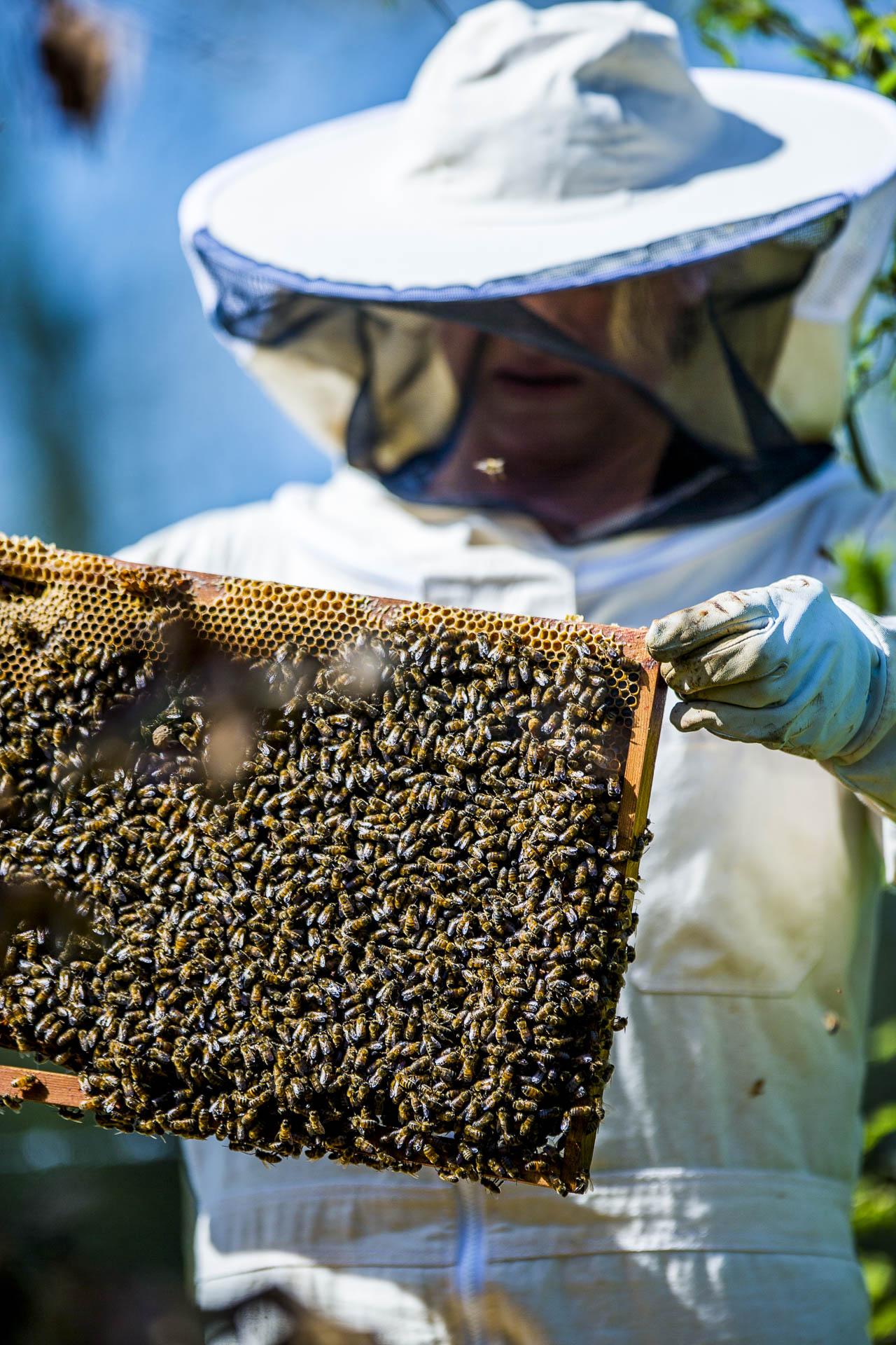 domainedablon_ruche_abeilles©stephaneleroy-13.jpg