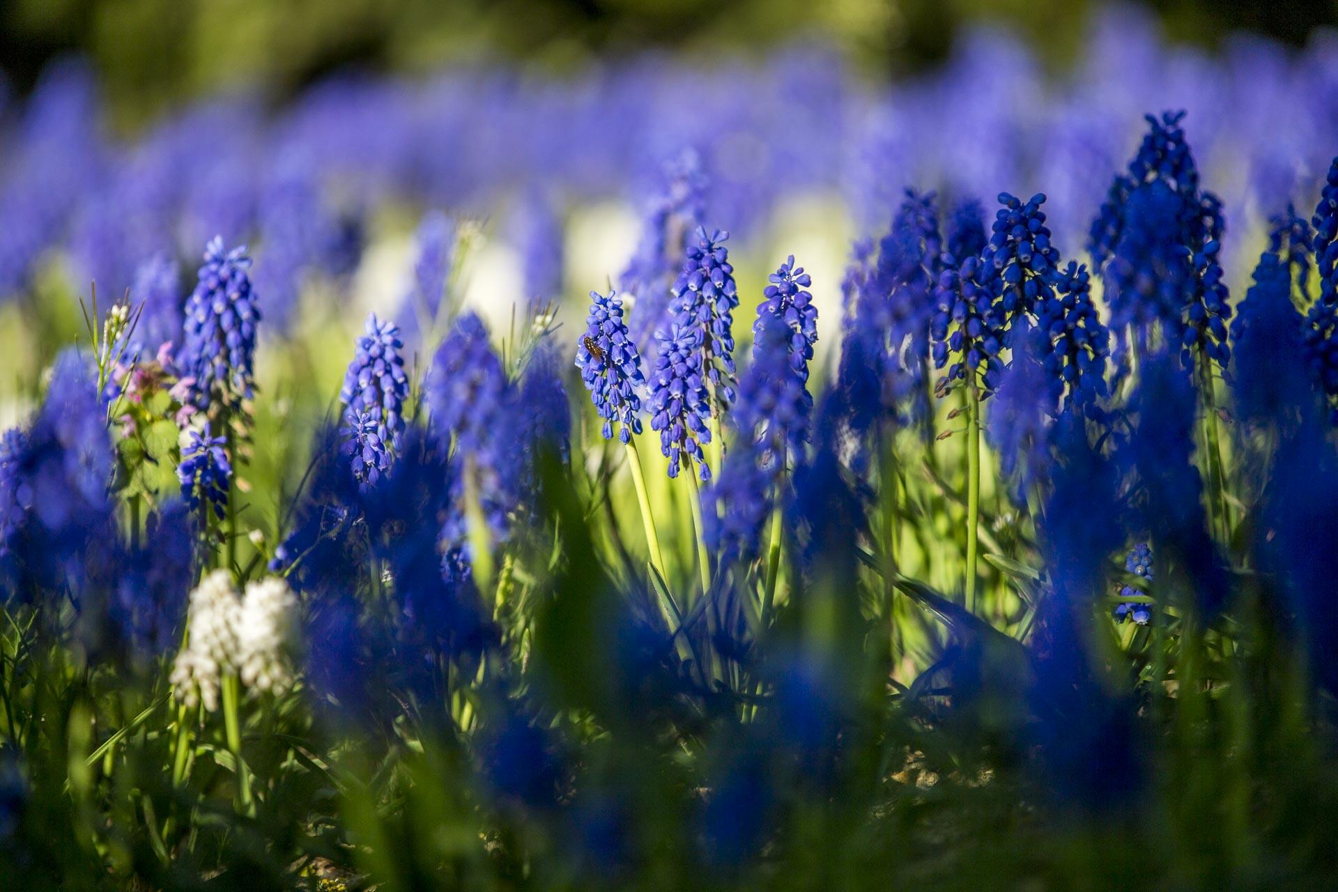 domainedablon_exterieurs_printemps©stephaneleroy-3804.jpg